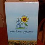 sunflowerguy-3